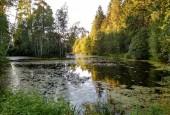 Минэкологии: в историческом месте Дмитровского округа создается ООПТ местного значения с 250-летними деревьями