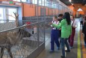Тематическая экскурсия с возможностью близкого общения с животными для детей с ограниченными возможностями здоровья