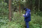 Система-112 Московской области помогает в поиске заблудившихся в лесу