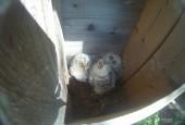 Минэкологии: редкие птицы заселили искусственные гнездовья