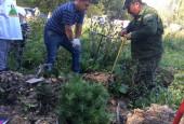 Почти 4,5 тысячи молоденьких сосен высадили в Бужарово