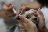 Защита от бешенства. В округе продолжается вакцинация животных